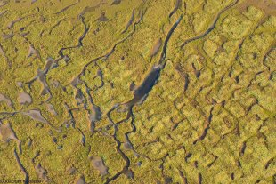 Amazonas-Wattenmeer von Joachim Kopatzki