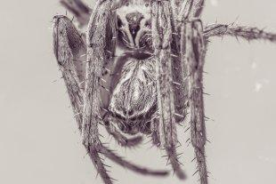 Arachnophobia von docolli