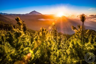 Canary Dream Sunset von Stephan Strange