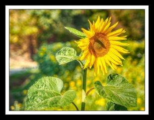 ...the last rays of sunshine.. von MixMax_14