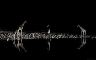 Nächtliches Durstlöschen von lewski