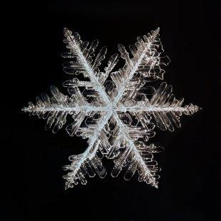 Schneeflocke von GuenterG