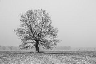 Der Baum von M. Rasch