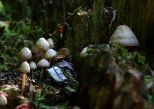Pilzfamilie von rague65