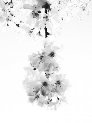 Blütenpracht von Neofelis