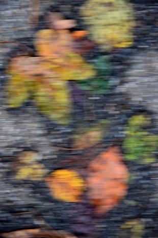Laubteppich von Labilla