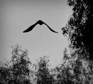 Unbekannter Vogel von Mira1959