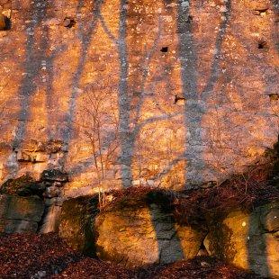Baumschatten von dermaeus