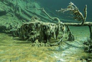 Unterwasserwald von Mike R