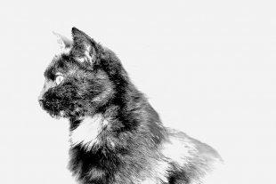 High Key Cat...2 von Texas Longhorn