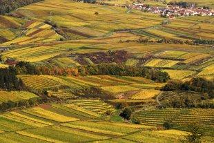 Herbstlandschaft Weinberge von Pfalzknipser
