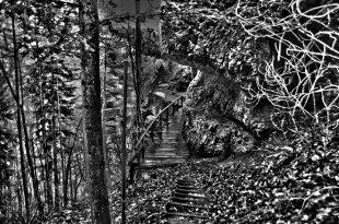 Felsenweg SW von Cactus64