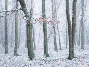 Eichenwald im Schnee von FelixW80