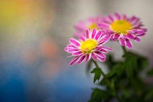 Blumen von Daborius