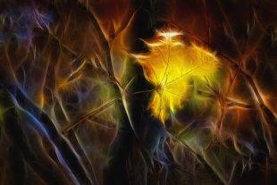 Herbstleuchten 2 von Addi Beck