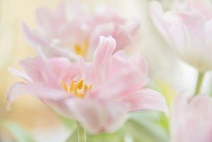 Zarte Blüten von Hubert Brenner