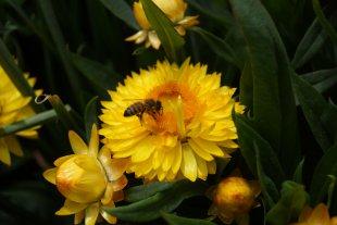 Blume von Terrabooster