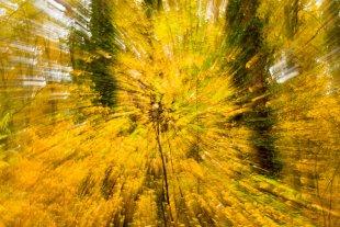 Blätterfall von JensonR