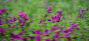 Feldblumen im Wind...... von claus-labenz