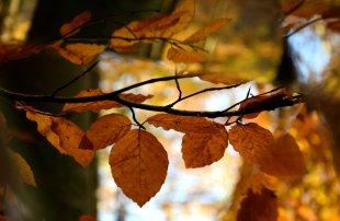 Herbst-Mosaik von Labilla