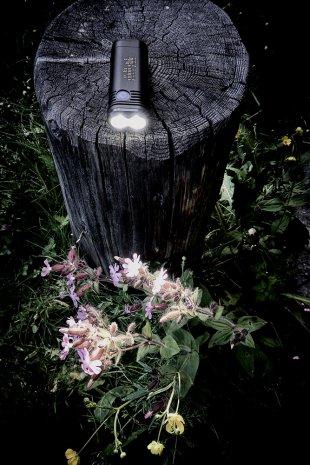 Lampe u. Blumen... von Texas Longhorn
