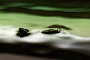 Schnorcheln im Zoo von Klaus D.