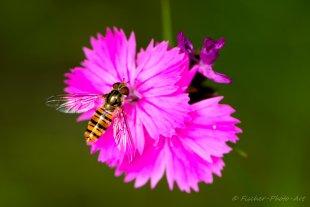 Ich flieg auf Pink von H.-Dieter Fischer