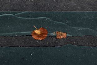 Auf dem Boden - Blätter von Dirk E.