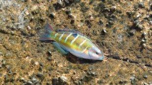 Gran Canaria 2020 - Fisch im (Un)Glück von Andre Tuschinsky