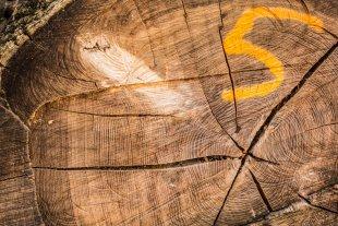Die Jahre des Baumes und die Spuren der Säge von JensonR