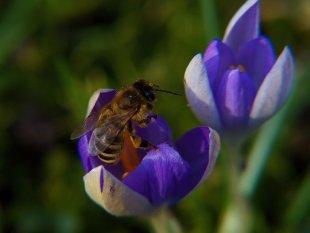 Bienen-workout von dh_zelmen