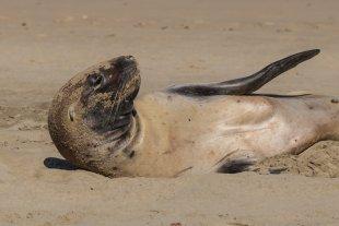 Seelöwe Kopf seitlich von clickfux