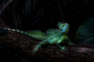 Green Dragon von dietmar29