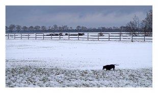 Dackel im Schnee von pewebe