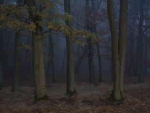 Eichenwald von FelixW80