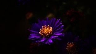 Leuchtblüte von Joerg94