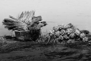 Reisanbau Sumatra 6 von Andrea Künstle