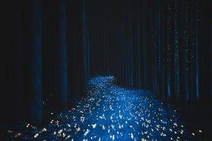 im dunklen Wald von Uschi Hermann