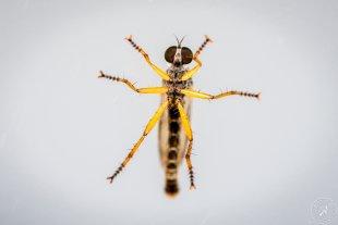 Insekt auf Fensterscheibe von Stephan Strange