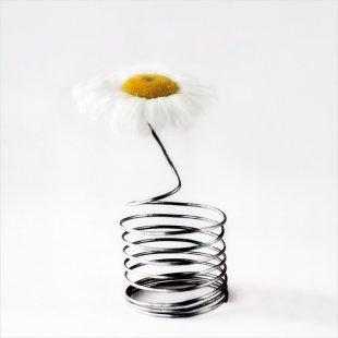 Blume Unbekannt von eschem