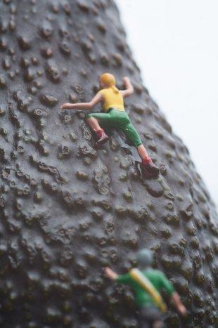 Miniaturwelt - Avocado erklimmen von Ditmar Kerkhoff