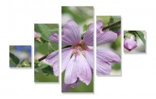 Hibiskusblüte von Didjeh