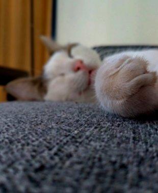 Katzen.Pfötchen. von Mira1959