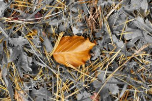 Ein Herbstblatt von H.-Dieter Fischer