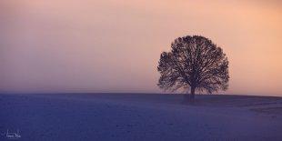 lone tree von tom71
