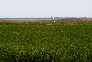 Boddenlandschaft in der Nähe von Ahrenshoop von Random-X