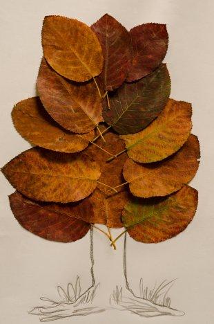 Herbstbaum von WSCU-Foto