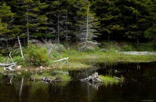 Acadia NP von lewski