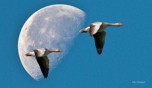 Mondflug von Otto Hitzegrad