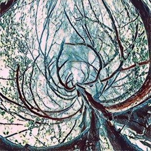 spinning tree von kahekl